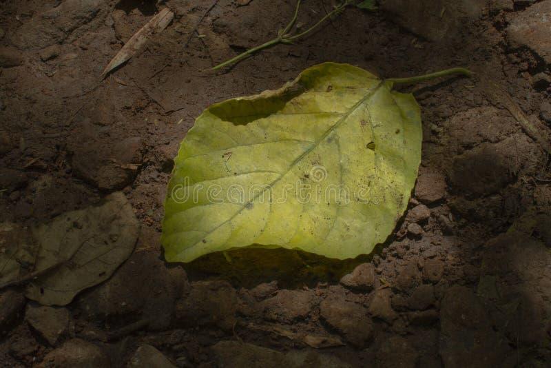 Ett stupat blad p? jordningen arkivfoton