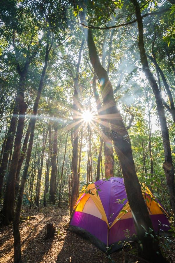 Ett tält i djungler fotografering för bildbyråer