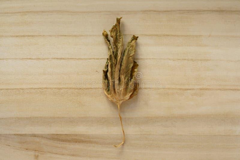 Ett torkat bittert kalebassblad arkivfoton