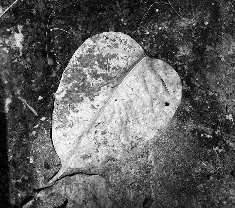 Ett torkat blad fotografering för bildbyråer