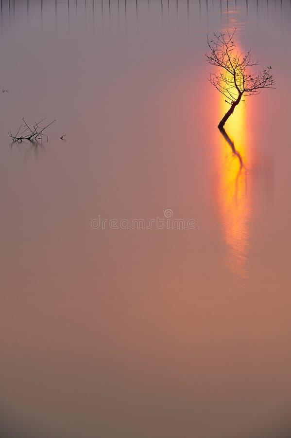 Ett träd royaltyfri foto