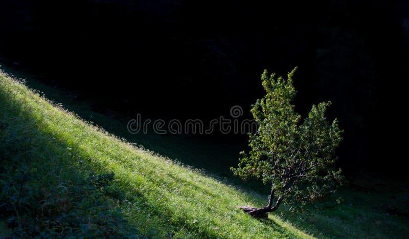 Ett träd arkivbild