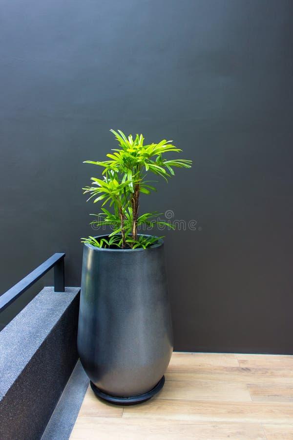 Ett träd i en kruka på en grå betongvägg arkivfoton