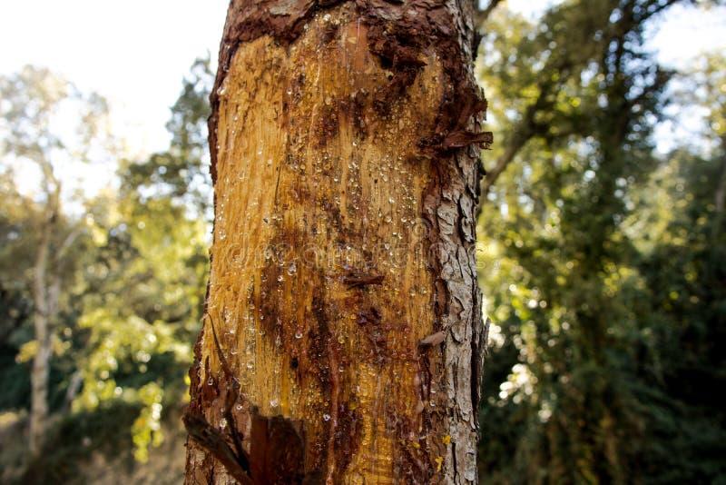 Ett träd med underminerar arkivfoto