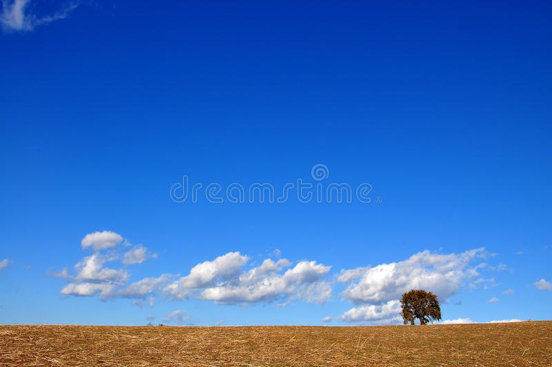 Ett träd, några bryner, en enorm blått och ett stycke av det vita molnet arkivfoton