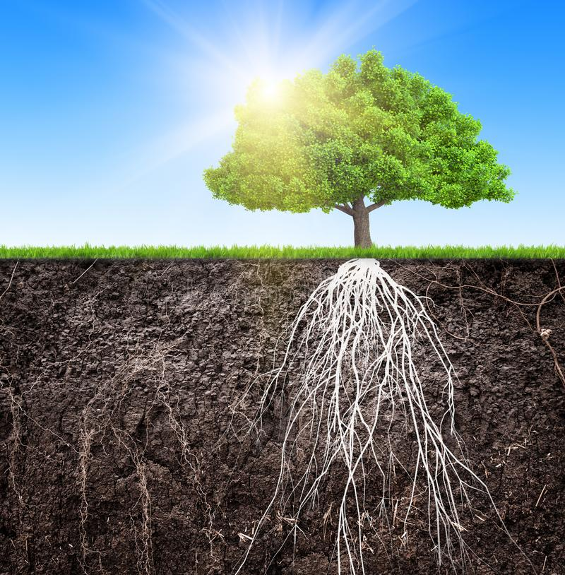 Ett träd och en jord med rotar och en illustration för gräs 3D stock illustrationer