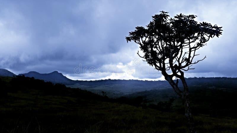 Ett träd och ett mörker royaltyfria foton