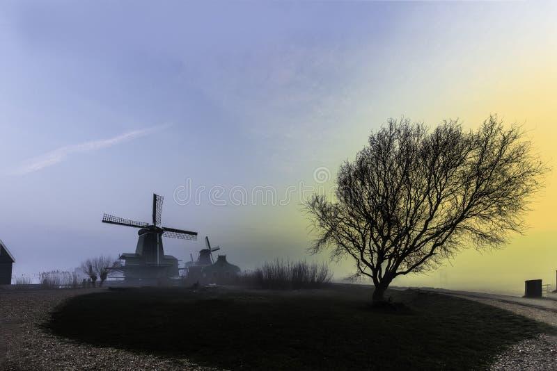 Ett träd och hungriga sågverk fotografering för bildbyråer