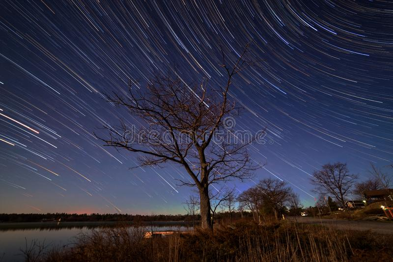Ett träd och stjärnaslingor arkivfoton