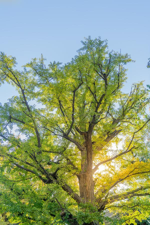 Ett träd som växer och frodas royaltyfri fotografi