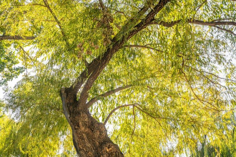 Ett träd som växer och frodas royaltyfri bild
