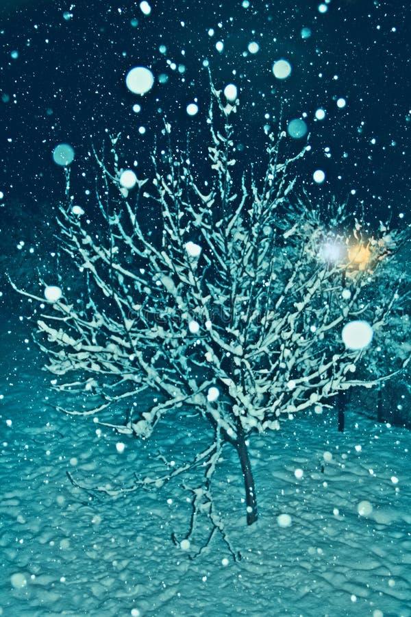 Ett träd täckte med insnöat en kall vinternatt royaltyfria bilder