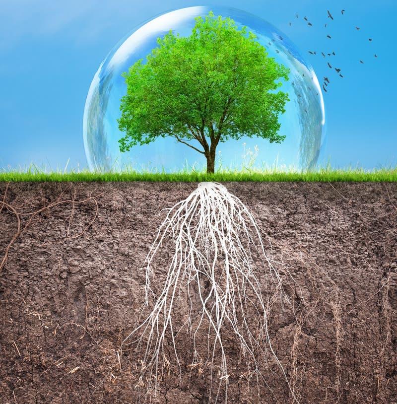 Ett tr?d och en jord med rotar och gr?s vektor illustrationer