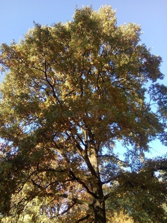 Ett trevligt stort träd i det västra parkerar av den Dortmund Tyskland arkivbild