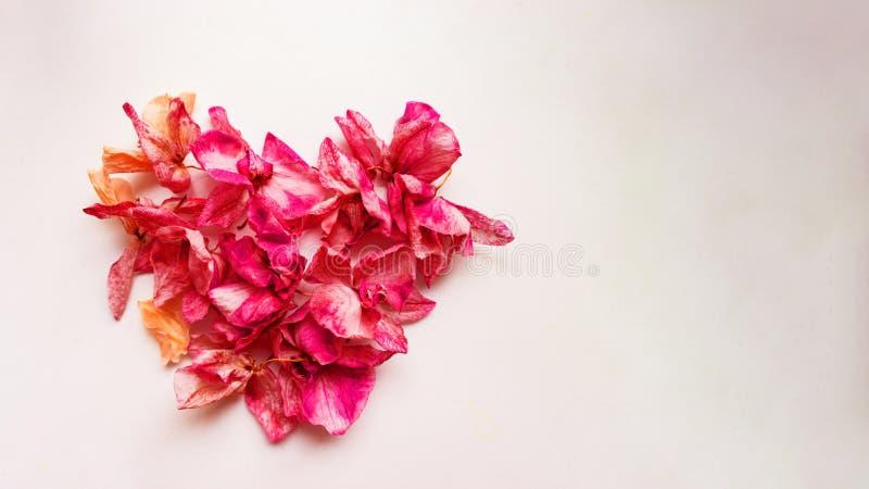 Ett vackert hjärta av blommor Begreppet kärlek och evighet Vaktkort till alla hjärtans dag och en kärleksförklaring royaltyfria foton