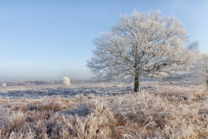 Ett vinterlandskap i mitt av Nederländerna arkivbild