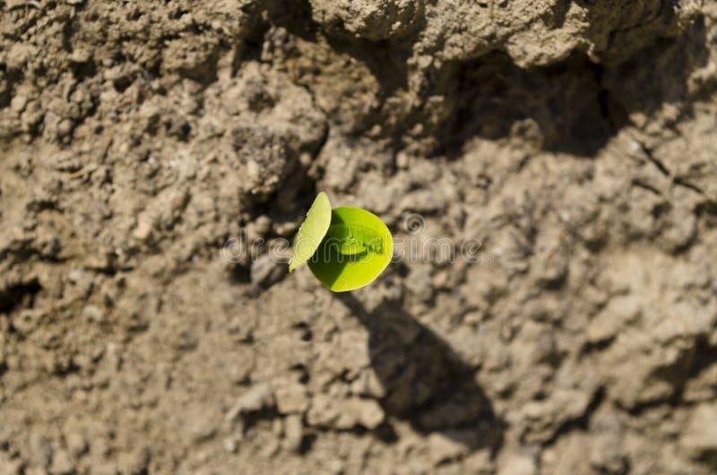 Etudes verdes de la primavera fotografía de archivo libre de regalías