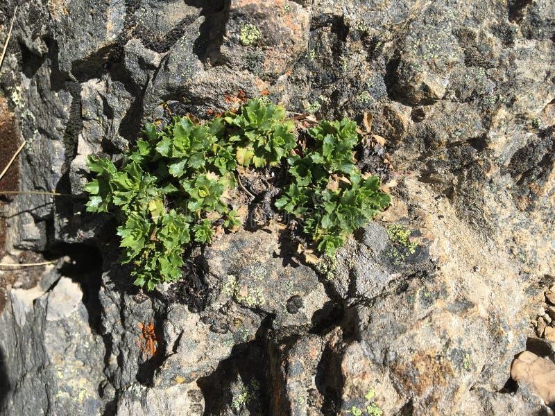 Etwas Grün auf den Felsen lizenzfreie stockfotografie