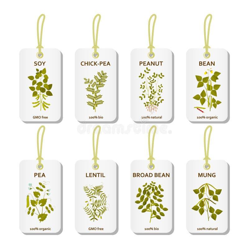 Etykietki z legumes roślinami z liśćmi, strąkami i kwiatami, royalty ilustracja