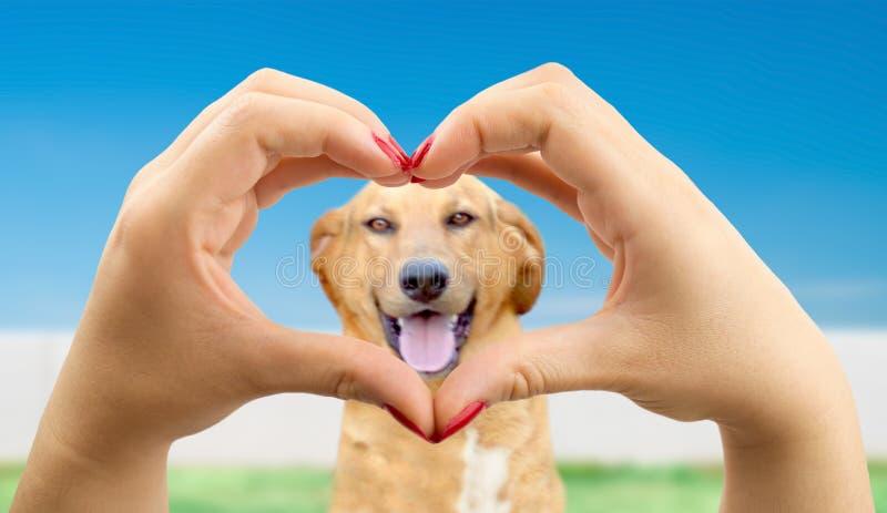 Eu amo meu cão imagens de stock royalty free