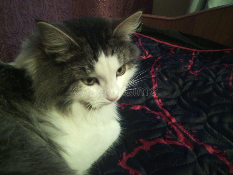 Eu amo meu gato fotos de stock royalty free