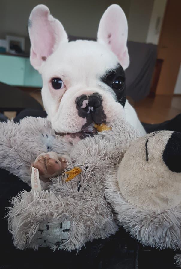 Eu amo meu urso pequeno foto de stock