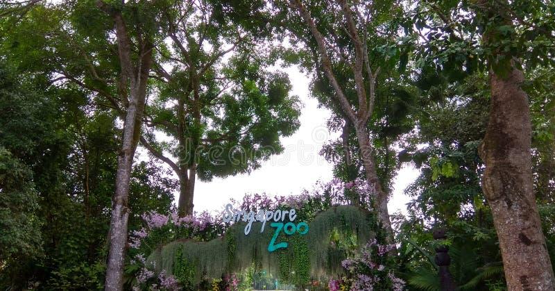 Eu amo Singapura com flores e árvores fotos de stock royalty free