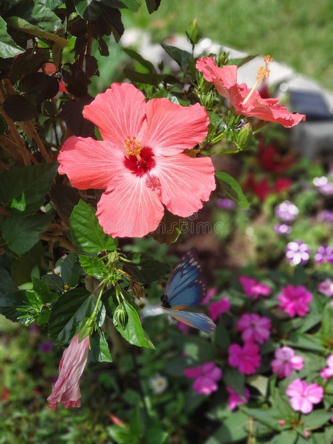 Eu molhei minhas plantas! fotografia de stock royalty free