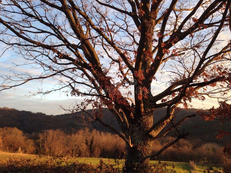 Eu sou a árvore fotos de stock royalty free
