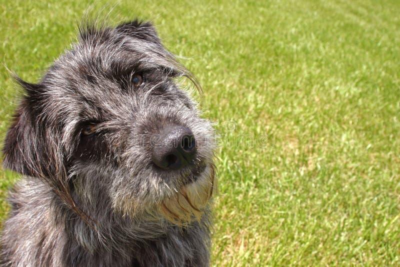 Download Eu sou perdido imagem de stock. Imagem de animal, cães - 113649
