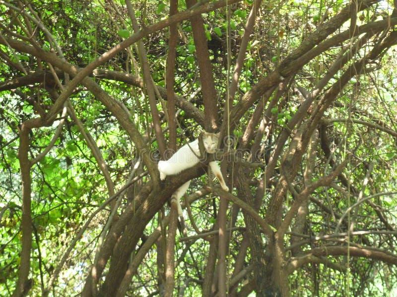 Eu submeto uma imagem da paisagem de um gato que descansa no árvore-refeições matinais imagem de stock