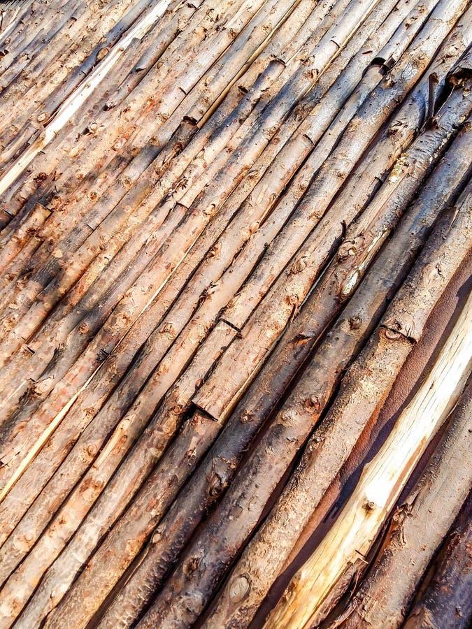 eucalyptus stock afbeeldingen