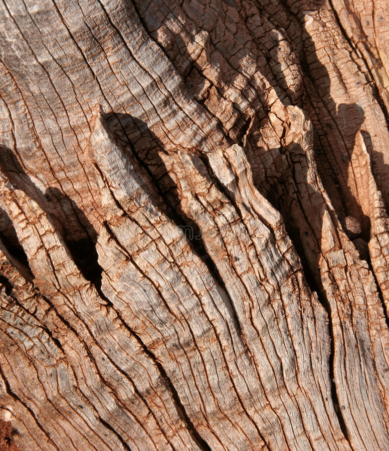 Eucalyptus bark detail royalty free stock photos