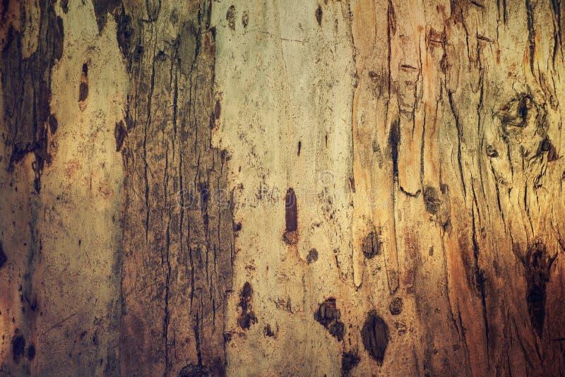 Download Eucalyptus Bark Texture Stock Photo - Image: 83704846