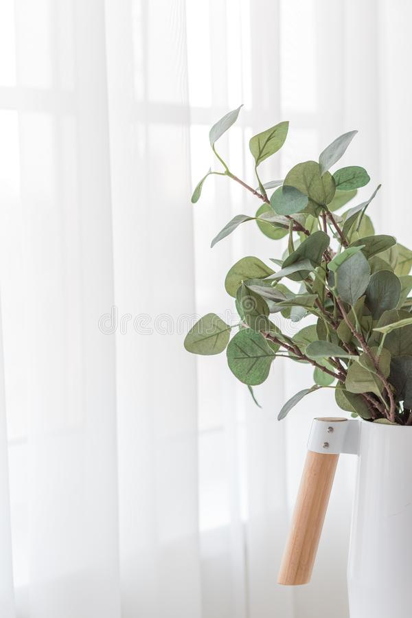 Eucalyptus branches in a minimalistic white vase on white background of curtains near the window stock photo