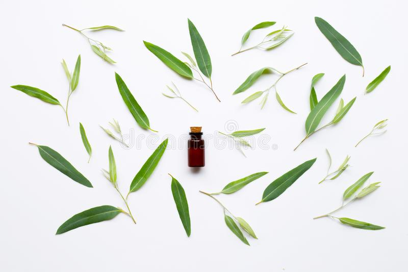 Eucalyptus essential oil bottle with  leaves on white royalty free stock photos
