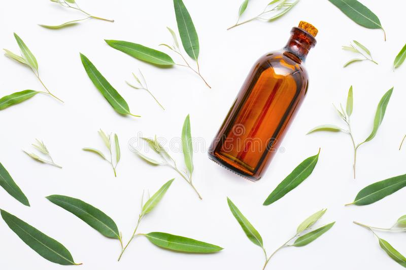 Eucalyptus essential oil bottle with  leaves on white stock photo