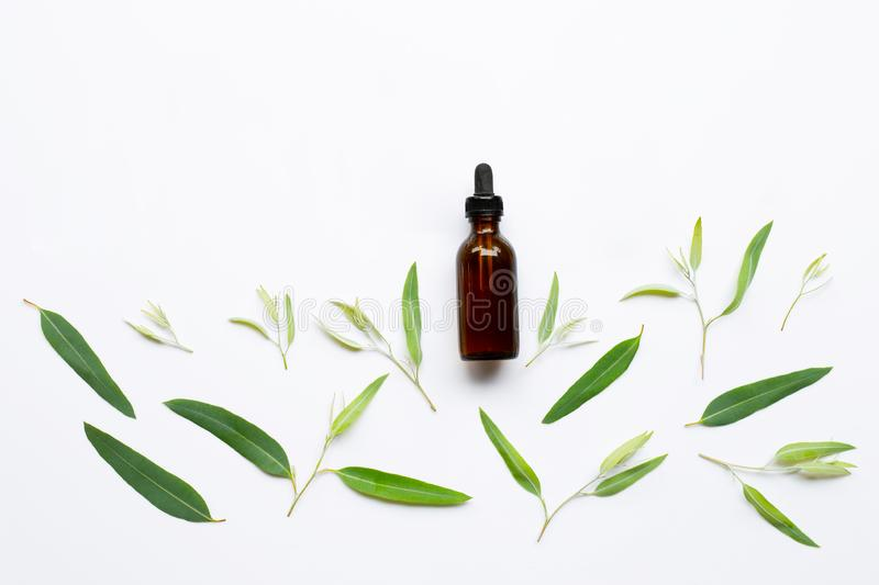 Eucalyptus essential oil bottle with  leaves on white royalty free stock image