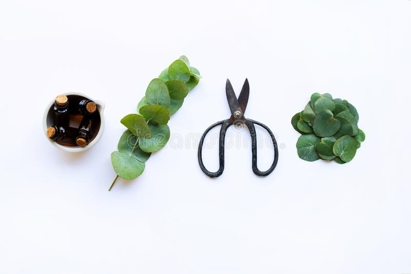 Eucalyptus essential oil with branch, leaves of eucalyptus and vintage scissors on white stock photography