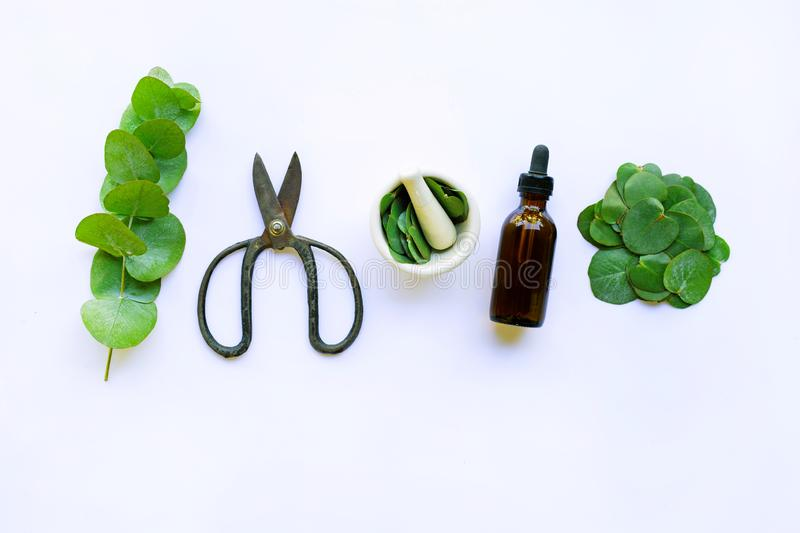Eucalyptus essential oil with branch, leaves of eucalyptus and vintage scissors on white royalty free stock image