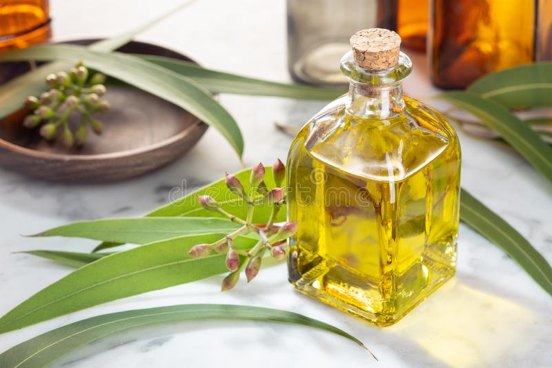 Eucalyptus essential oil. Eucalyptus oil on glass bottle with dropper. Herbal medicine stock photos