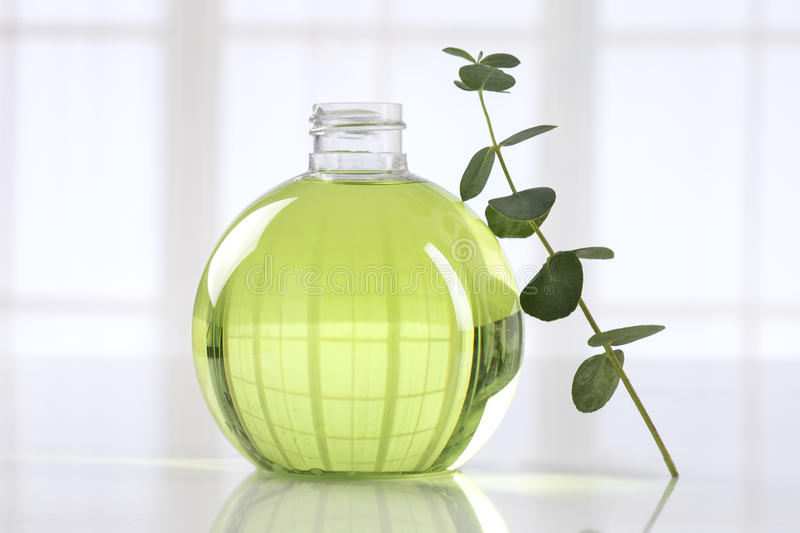 Eucalyptus essential oil. Eucalyptus leaves and essential oil stock photography