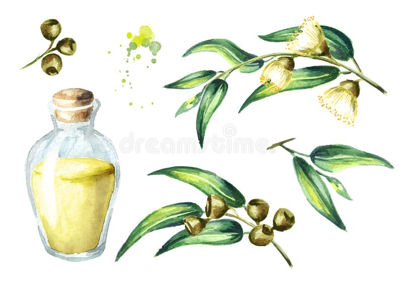 Eucalyptus essential oil set. Isolated on white background. Watercolor hand drawn illustration royalty free illustration