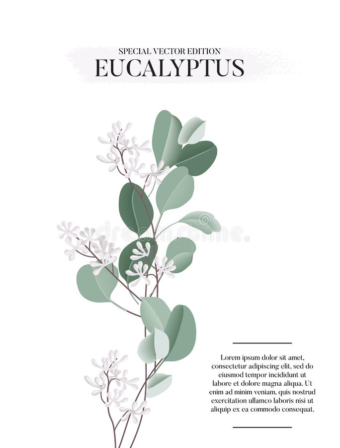 Free Eucalyptus Floral Watercolor Art Card Template, Hand-drawn Vector Concept With Liquid Flower And Leaves. Realistic Greeting Royalty Free Stock Photo - 168242305
