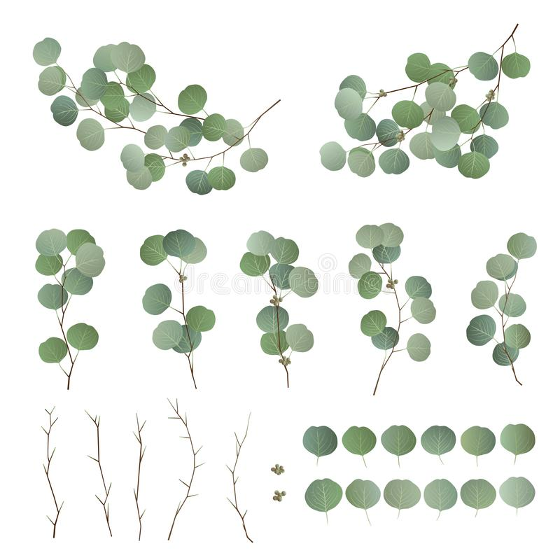 Eucalyptus leaves and branch collection. Vector illustration royalty free illustration