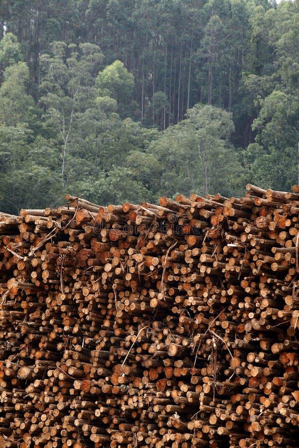 Download Eucalyptus logs stock photo. Image of vegetation, plant - 29712474