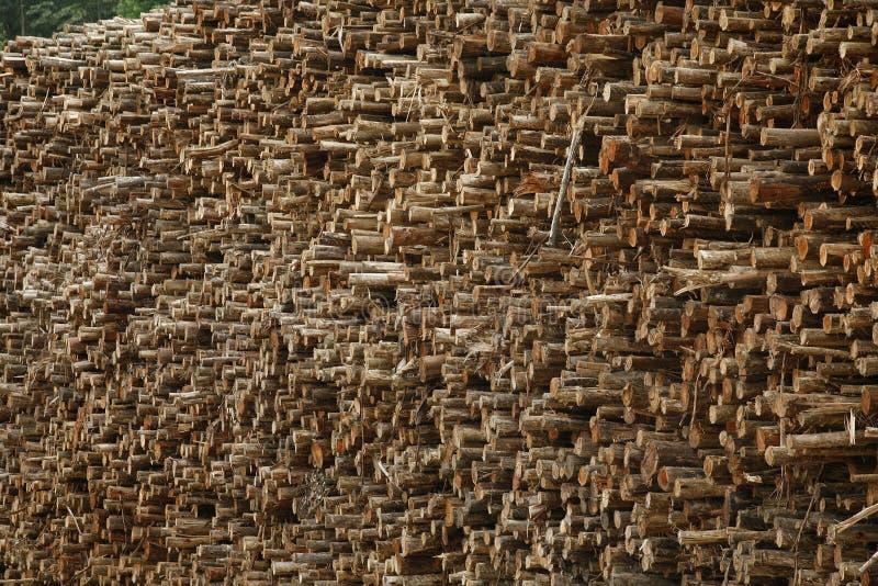 Eucalyptus Logs Royalty Free Stock Image