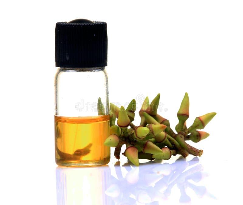 Eucalyptus oil royalty free stock photo