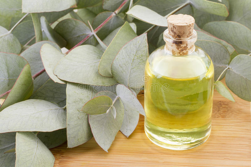 Eucalyptus oil and leaves stock image