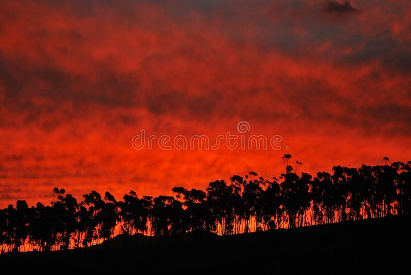 Eucalyptus at sunset stock photography